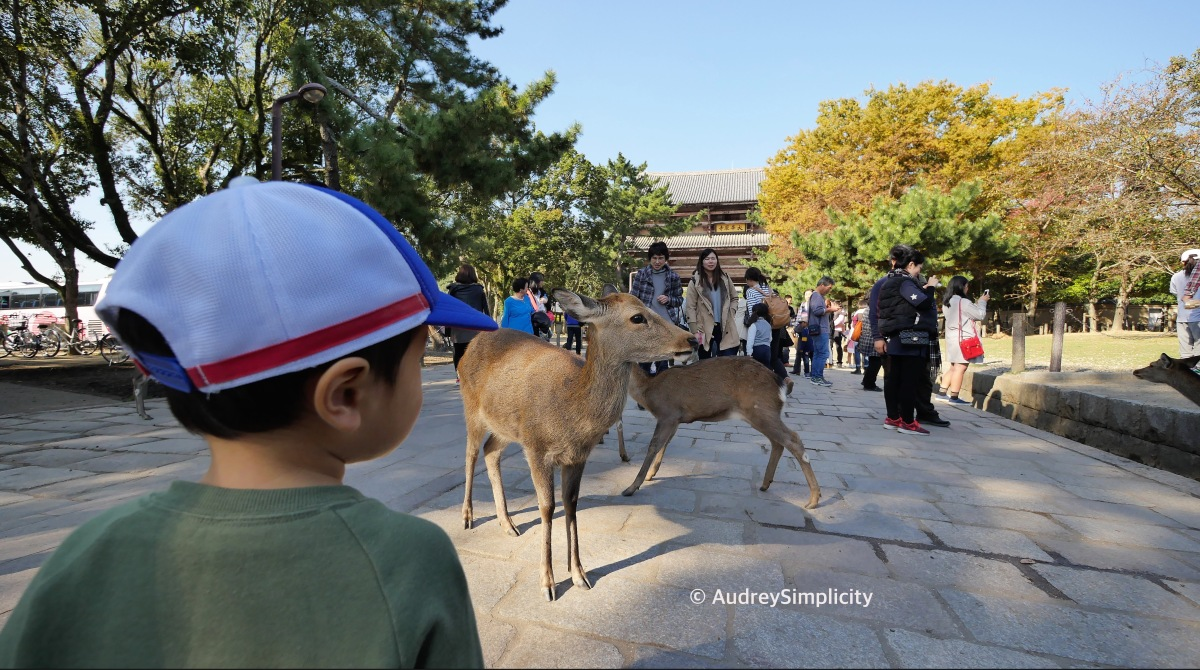 "Autumn in Nara ""Bambi Land"""
